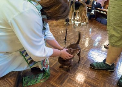blessing-of-the-animals-14