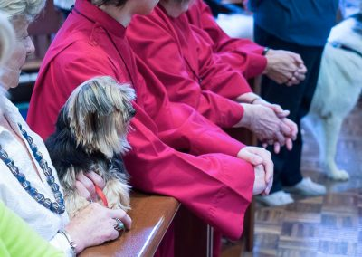 blessing-of-the-animals-2